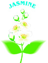 Figwort Correspondences | RM.